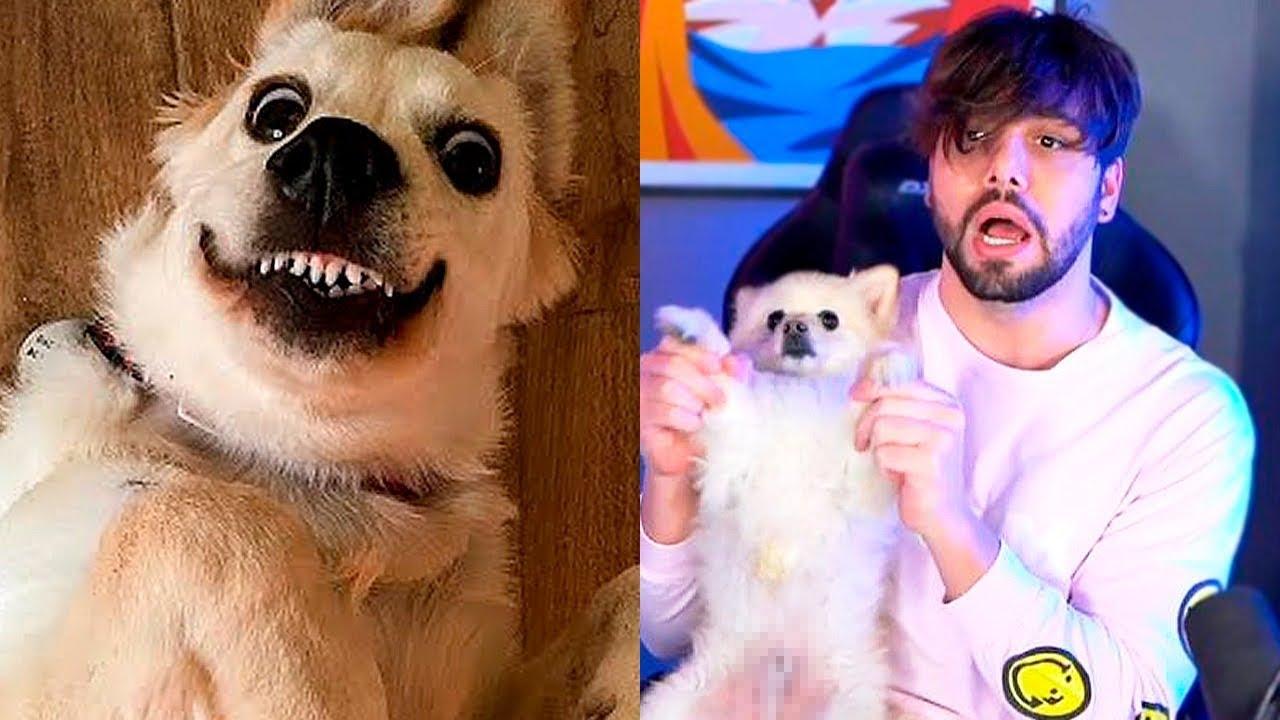 Só vai rir desse vídeo quem tiver cachorro em casa
