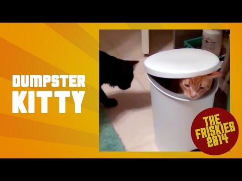 Funny Cat Hides in Dumpster – The Friskies Awards 2014