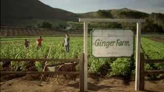 Canada Dry: Jack's Ginger Farm