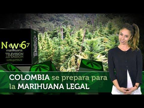 Colombia se prepara para la MARIHUANA LEGAL. Expo Bogotá, ExpoMedeWeed, Cultivo en el Cauca  NEWS 67
