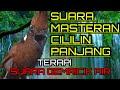 Cililin Gacor Panjang Untuk Masteran Suara Gemericik Air Zain Kicau  Mp3 - Mp4 Download