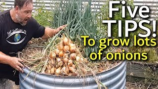 5 Tips How to Grow a Ton of Onions in One Container or Garden …