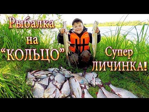 Август! Рыбалка на КОЛЬЦО! Работает ЛИЧИНКА! Отличный Улов -Первый день! р.Чулым!