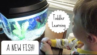 TODDLER LEARNING | Betta Fish Care on a Budget!