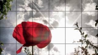 Armand Van Helden - Flowerz