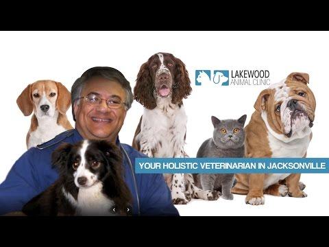 Best Veterinarian Jacksonville FL Southside Blvd