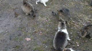 Стая котов