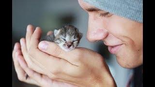 10 ВЕСОМЫХ ПРИЧИН ЗАВЕСТИ КОТА  Доказано учеными!  10 GOOD REASONS TO GET A CAT