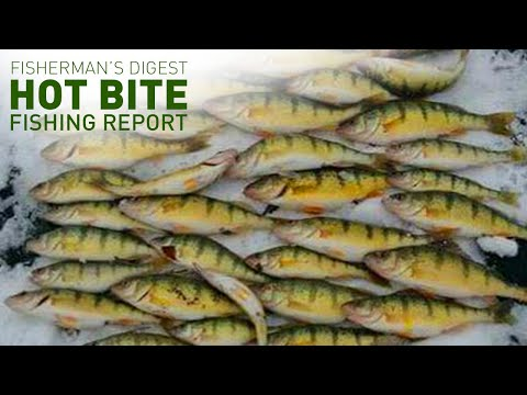 Ice Fishing Here We Come!!! - Hot Bite Fishing Report - Dec 11th