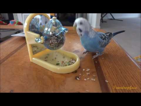 Mango & Blueberry's New Items
