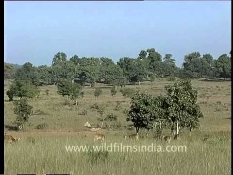 Deers - The ruminant mammals