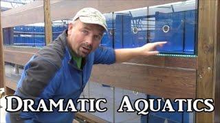 Dramatic Aquatics - Shop under construction....