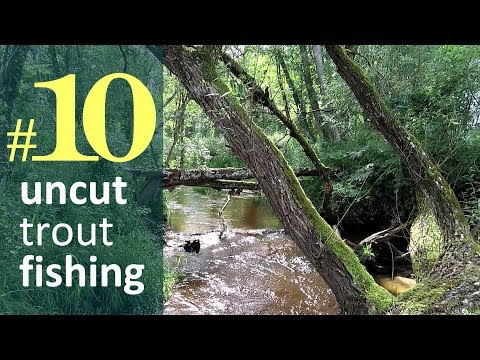 Midsummer Small Stream Trout. Uncut Fishing #10