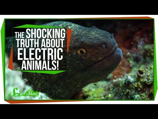 The Shocking Truth About Electric Animals!