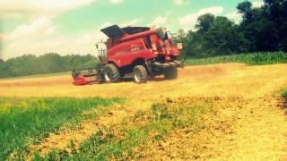 Žetev pšenice