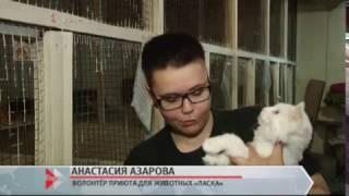 В Барнаульском приюте «Ласка» этим летом откроется котокомната
