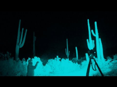 Photography On Location: Sonoran Desert Saguaros (Pt. 1)