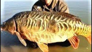 Rare River Fish Kulambu Prepared by my home  / My Village food