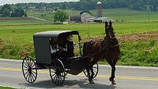 Amish Child Sex Sting in Horse-Drawn Buggy