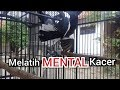 Tes Mental Kacer Tarung Full Isian Gacor Ngobra  Mp3 - Mp4 Download