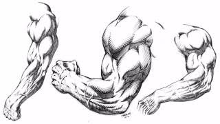 Drawing Muscular Stylized Arms for Comics Demonstration