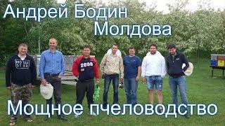 Пчеловодство Андрея Бодина. Молдавское пчеловодство