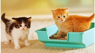 How to Litter Train a Kitten - Cat Litter Comparison