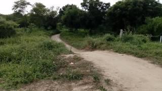 S. S. Rana stant video
