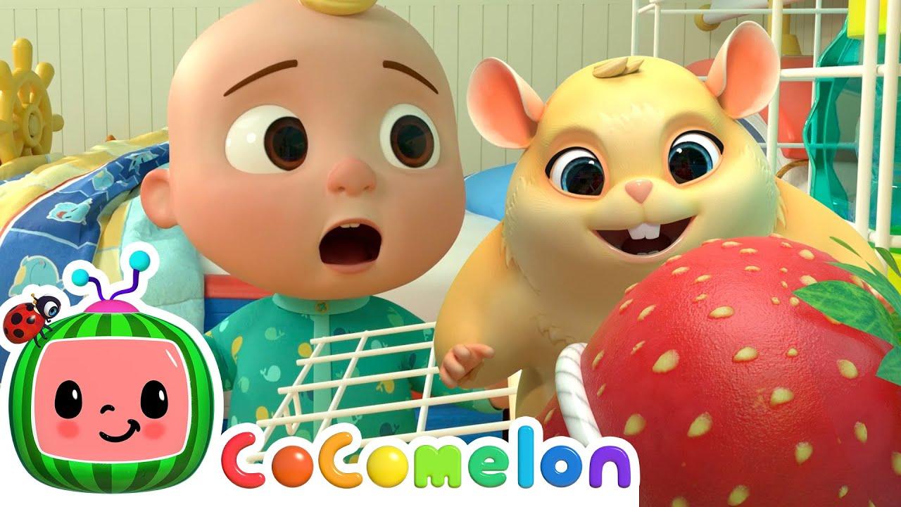 Lost Hamster Song!   CoComelon Nursery Rhymes & Baby Songs   Moonbug Kids