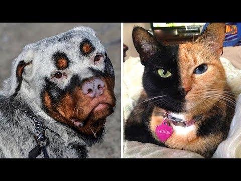 7 حيوانات ولدوا مع ميزات غريبة أدهشت العالم  - نشر قبل 5 ساعة