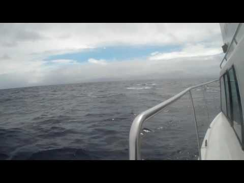 Swimming with Humpback Whales Tonga 2016