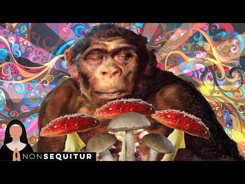 Stoned Ape Theory and DMT's Effect on Consciousness | Isaac Lindenberger