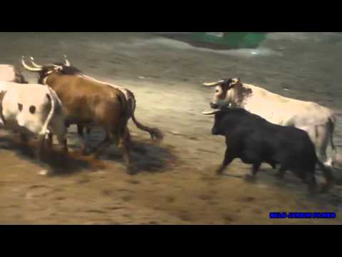 TUDO PODE ACONTECER NA ULTIMA LARGADA NOTURNA SEMANA TAURINA SAMORA CORREIA 2015