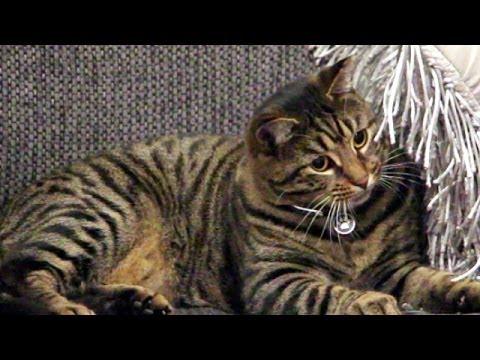 female or male kitten
