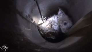 Heroes Save A Kitten Stuck In A Pipe
