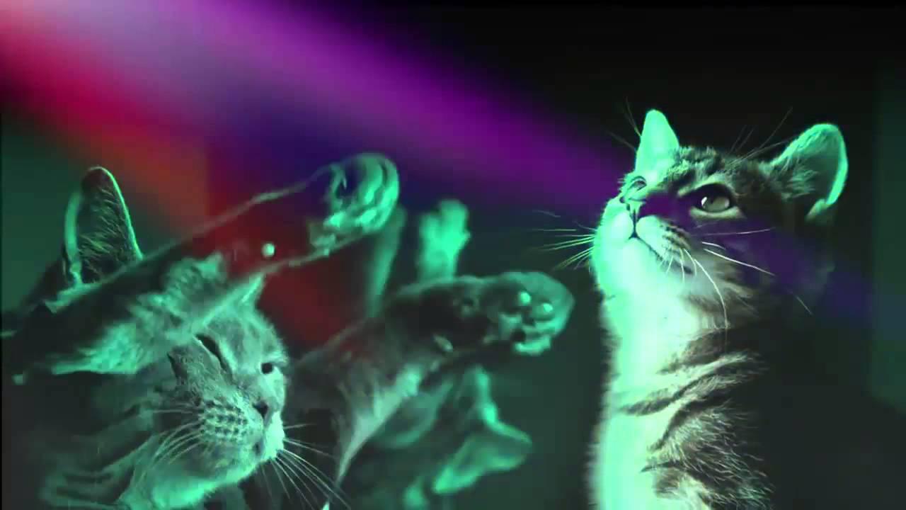 Remix Do Gato Miau Miau Miau Miau