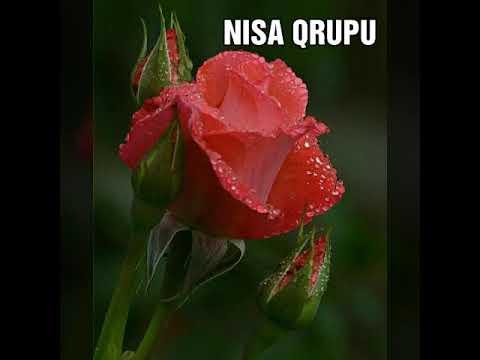 Nisa Qrupu - Ya Resul Allah 2019