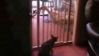 best cat jump ever