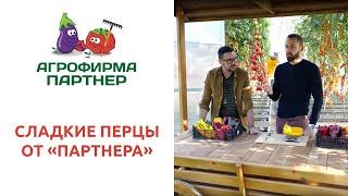 """СЛАДКИЕ ПЕРЦЫ ОТ """"ПАРТНЕРА"""""""