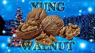 yung walnut - christmas special 2018