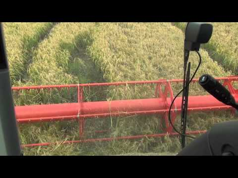 Видео Massey ferguson 750 combine information
