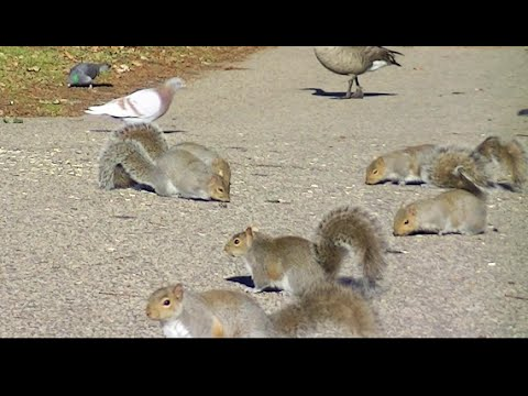 Squirrels For Cats and Dogs to Watch, 3 Hour HD Video For Cats and Dogs !