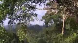 Ibis Giant- Symbols in the smoke