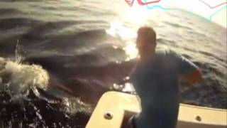 Ocean Warriors hand lining huge marlin