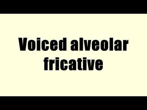 Voiced alveolar fricative