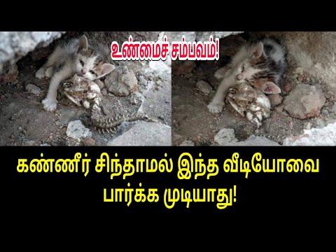 கண்ணீர் சிந்தாமல் இந்த வீடியோவை பார்க்க முடியாது! | Tamil trending News | Today trending video
