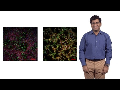 Mohit Jolly (Rice U.): Circulating tumor cell cluster: A model for cancer metastasis