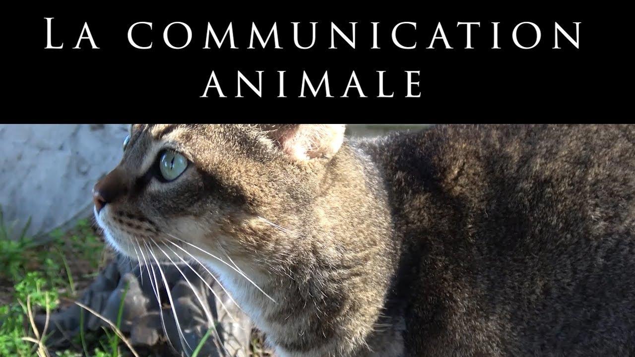 La Communicación Animale - Gemma Olivares
