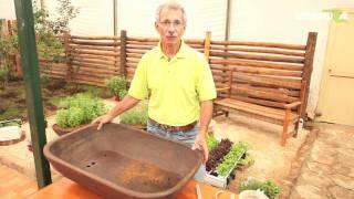 Hidroponia: saiba como montar uma horta ...