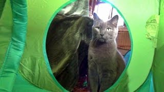 The Kits Cats Meet The IKEA Kids Tent - Vlog #4